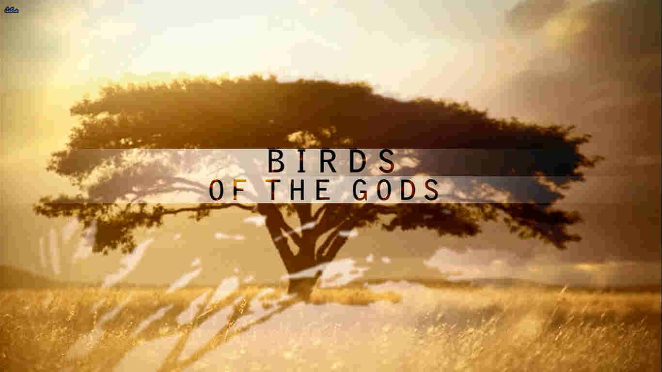 Birds of the Gods