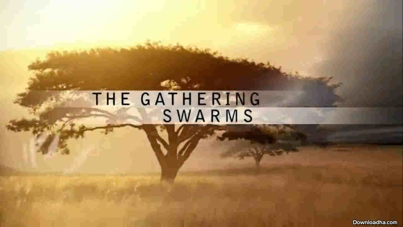 The Gathering of Swarms