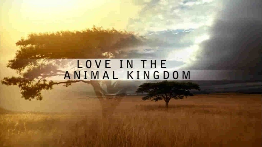 Love in the Animal