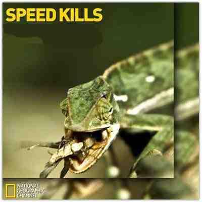 Speed Kills Jungle